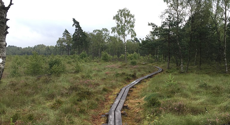 The bog with some trees and a wooden hiking path