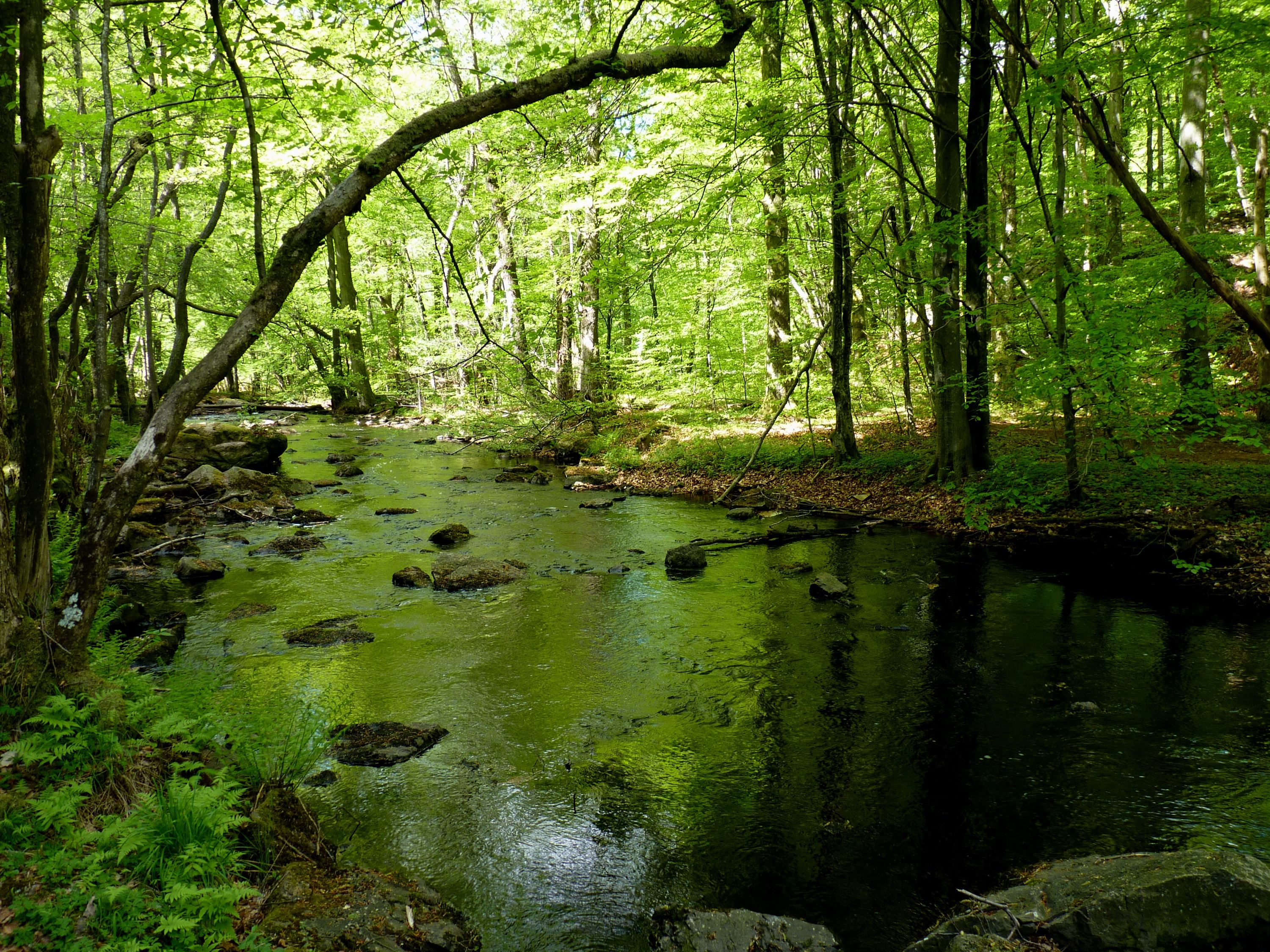 A calm stream surrounded by summergreen trees